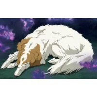 Image of Akizuki's 'puppy' / Borzoi
